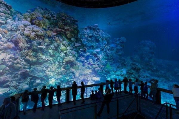 Panometer Leipzig / Great Barrier Reef