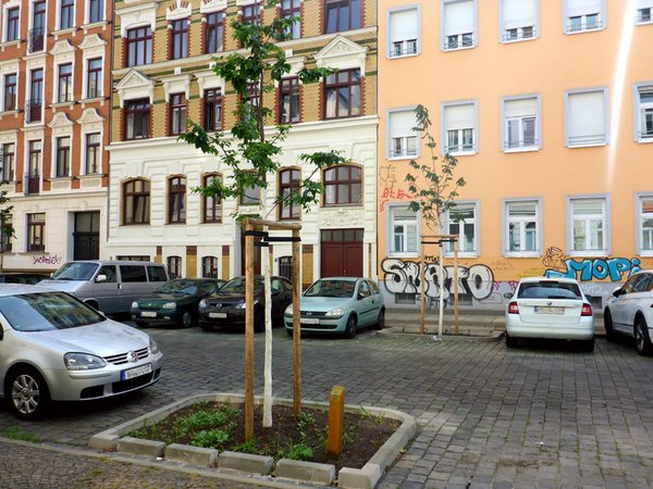 Neue Straßenbäume im Leipziger Süden, Foto: Ökolöwe