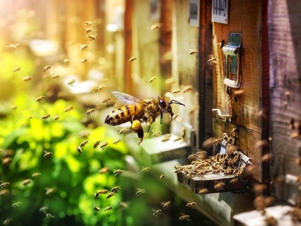 Bienen im Bienengarten - Gemeinsam viel erreichen, Foto: Zoo Leipzig