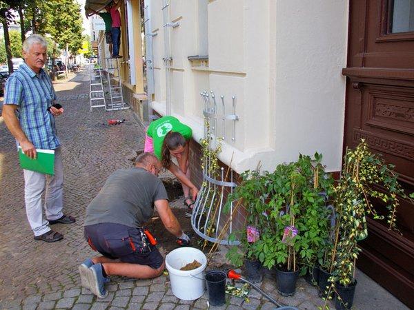 Kletterfixpflanzung in der Bornaische Straße 9