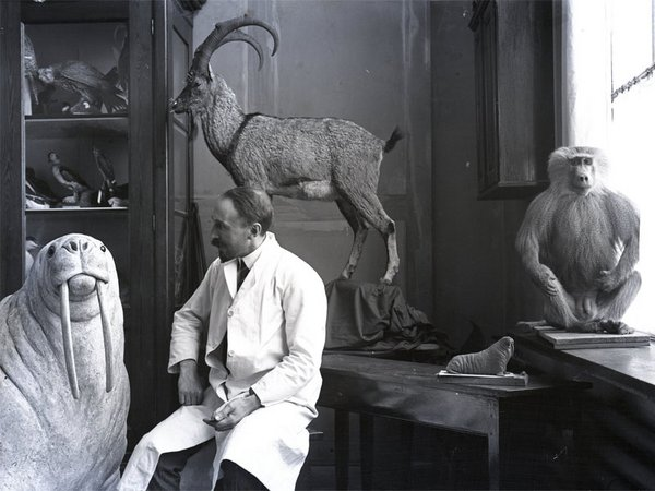 Herman Ter Meer im Atelier, Foto: Naturkundemuseum Leipzig
