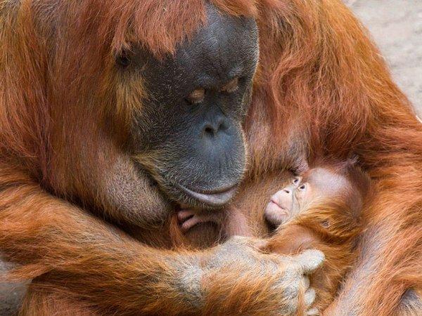 Pini mit ihrer Tochter, Foto: Zoo Leipzig