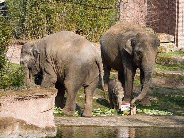 Kiran mit Mutter Rani und Tante Don Chung, Foto: Zoo Leipzig