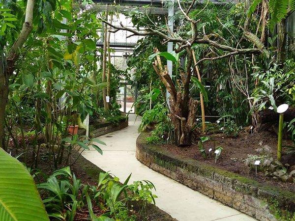 Rundgang durch die Schaugewächshäuser, Foto: Botanischer Garten