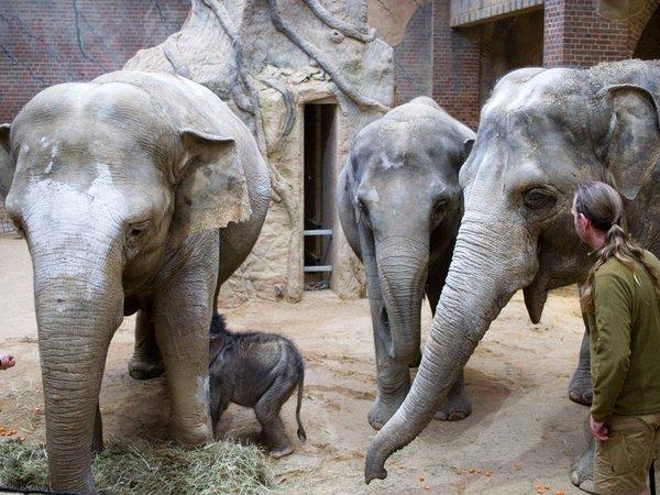 Unter der Aufsicht der Pfleger sind die Tanten beim Trinken dabei, Foto: Zoo Leipzig