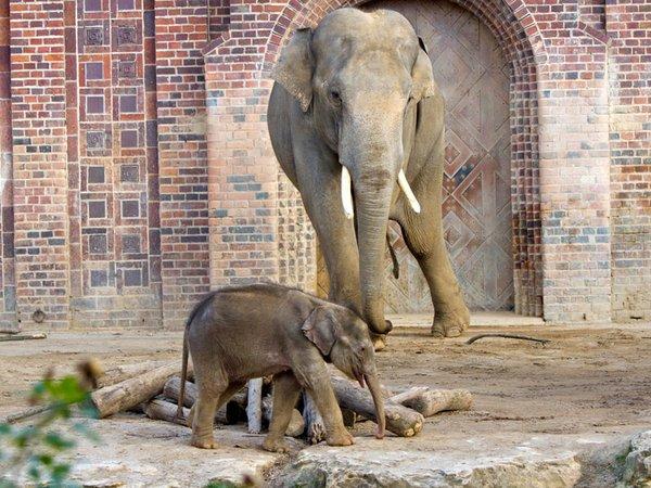 Voi Nam und sein Sohn, Foto: Zoo Leipzig