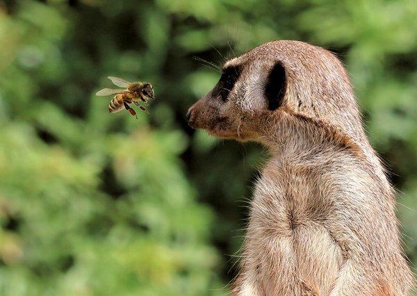 Bienen unterwegs im Zoo Leipzig