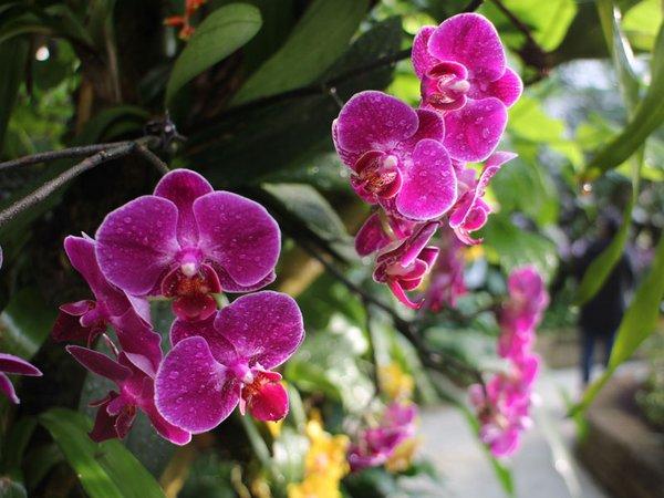 Tropischer Blütenzauber im Reich der Orchideen, Foto: Botanischer Garten