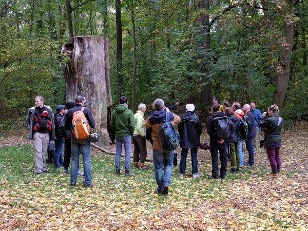 Wissenschaftler und Naturschützer führten Leipziger Stadträte durch den Auwald und erläuterten ökologische Zusammenhänge und naturschutz-fachliche Ziele, Foto: Doris Wolst/UFZ