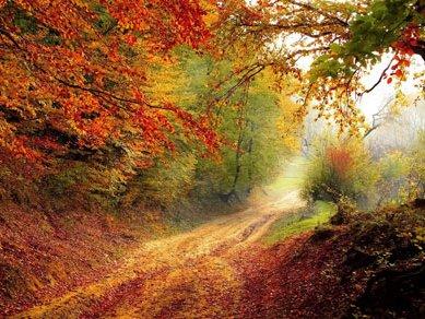 Abbildung: Der Herbst ist da mit all seiner Schönheit und Farbenpracht. Wer ein paar Tipps beherzigt, kommt gesund und vital durch die kalte, nasse und dunkle Jahreszeit, Foto: Pixabay © Valiphotos (CC0 Public Domain)