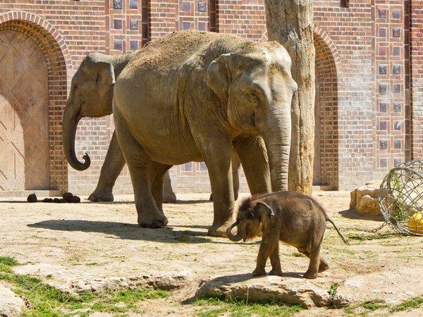 Das Jungtier mit Don Chung und Rani auf der Außenanlage, Foto: Zoo Leipzig