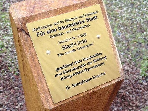 Patenschaft für eine Stadt-Linde in der Parthenstraße, Foto: Stiftung König-Albert-Gymnasium Leipzig