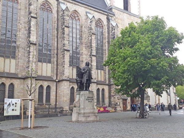 Neue Linde auf dem Thomaskirchhof, Foto: Ev.-Luth. Kirchgemeinde St. Thomas