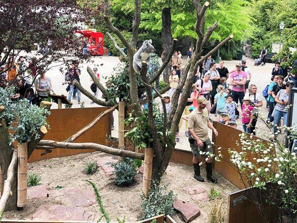 Das neue Außengehege für die Koalas, Foto: Zoo Leipzig