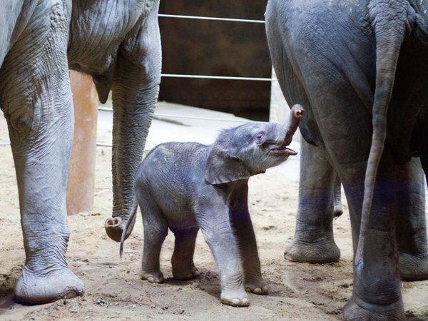 Ranis Jungtier zwischen Rani und Don Chung, Foto: Zoo Leipzig